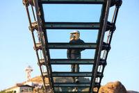 ساخت ترسناکترین پل جهان در اردبیل +عکس