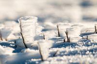 احتمال وقوع یخبندان ۱۰روزه در دی ماه چقدر است؟
