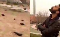 بازداشت عوامل ویدئوهای باران بادمجان در تهران