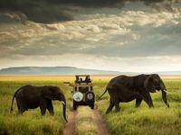 عبور از میان فیلها در عکس روز نشنال جئوگرافیک +عکس