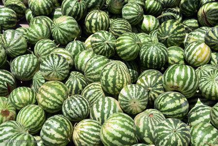 ۲۵۰هزار تن هندوانه بلاتکلیف است