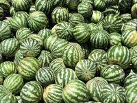 ممنوعیت صادرات اقلام کشاورزی به عراق +سند