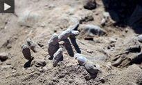 کشف اجساد شکنجه شده در گورهای جمعی حلب+عکس
