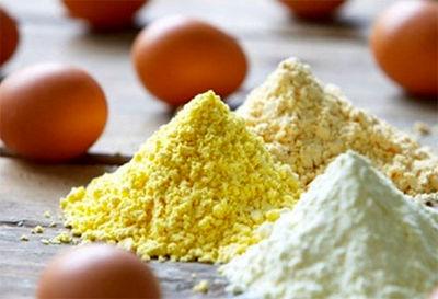 تولید پودر تخم مرغ؛ سرمایه گذاری پرسود و تاثیرگذار