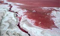 دریاچهای به رنگ صورتی +تصاویر