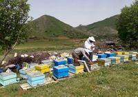 زنبورداران توانایی پرداخت حق بیمه خویش فرما را ندارند