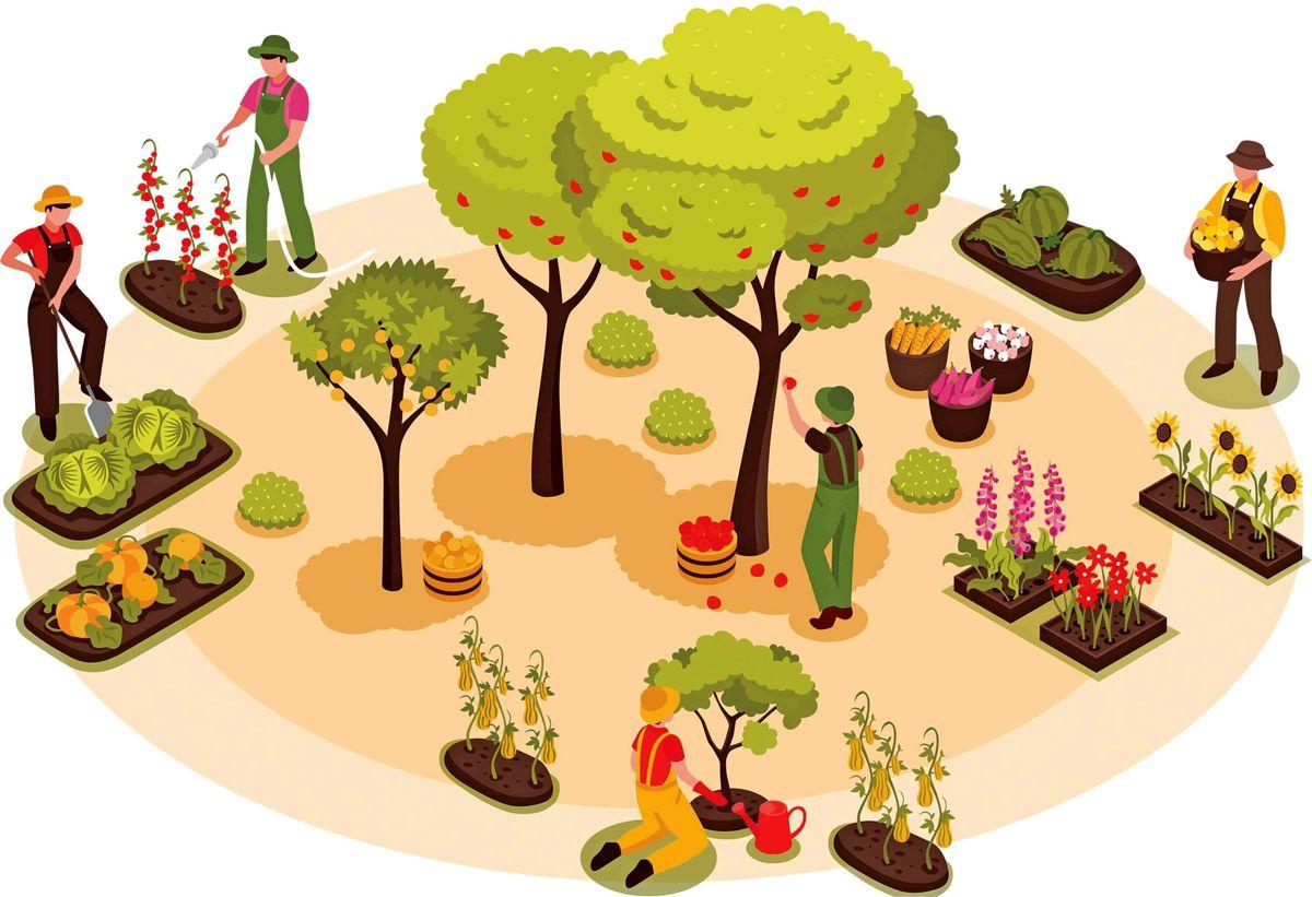 راهاندازی کشت محصولات کشاورزی نیازمند چه هزینههایی است؟