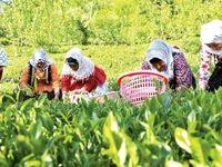 مردم پای چای وطنی ماندند