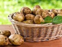 آغاز صادرات سیبزمینی به عراق از امروز