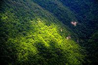 تاکید رییس مجلس بر اجرای طرح تنفس جنگل در طی دوره سهساله