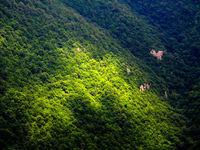 موافقت مجلس با تحقیق و تفحص از عملکرد سازمان جنگلها