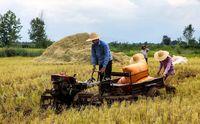 مخالفت مجلس با ممنوعیت کشت برنج