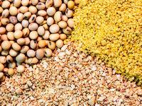 خواب سنگین وزارت جهاد کشاورزی/ افزایش ۲۵۰تومانی قیمت هر کیلو گرم دان آماده در کمتر از یک هفته