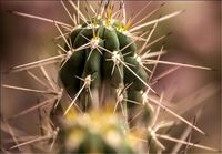 واردات دانه لوبیا و بذر کاکتوس محدود شد
