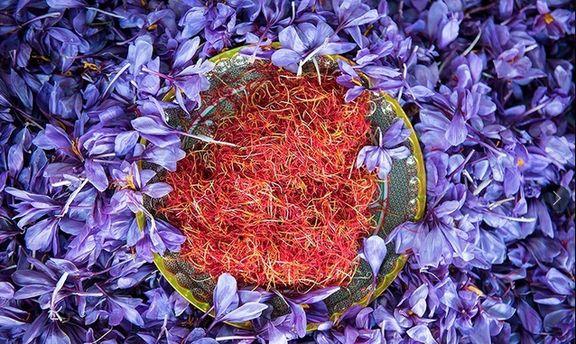 صدور زعفران ایرانی با یک برند قدرتمند/ سهمخواهی ۸۰درصدی ایران از بازار جهانی زعفران