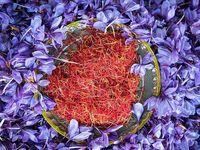 نگرانی از آینده بازار جهانی زعفران ایران  با افزایش غیر واقعی قیمت/ برای تامین سود کشاورز هزینه تولید را کاهش دهید