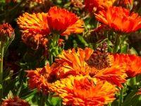 پروانههای اردیبهشتی در دامغان +تصاویر