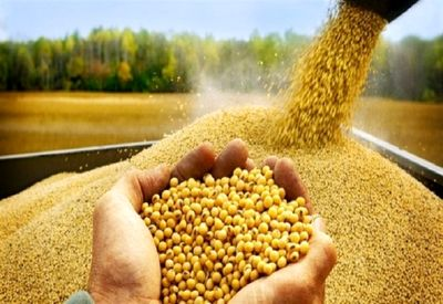 نهادههای کشاورزی در گروه اول ارز دولتی قرار