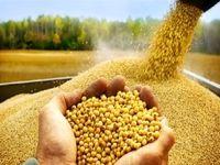 تولید بیش از ۵۰رقم بذر به بخش خصوصی واگذار شد