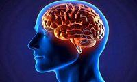 ۵خوراکی که مغز را تقویت و بازسازی میکنند