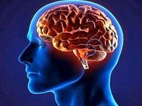مغز، کلسترول و امگا۳ را دوست دارد