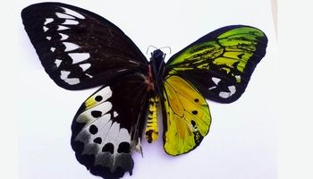 کدام جانوران تغییر جنسیت میدهند؟ +عکس