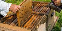 سامانه ثبت اطلاعات زنبورداران راهاندازی شد