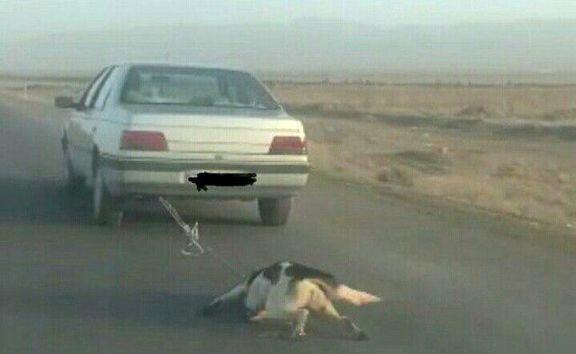 جریمه جالب مرد سگآزار: نگهداری از حیوانات مصدوم