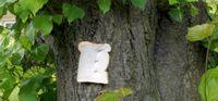ماجرای چالش بینام و نشان نان بر درخت چیست؟ +تصاویر