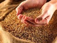 جلوگیری از توزیع گندم بی کیفیت با بورس کالا