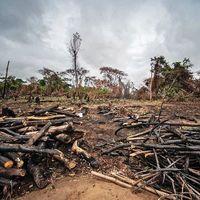 دومین جنگل گرمسیری بزرگ جهان در معرض خطر فرسایش