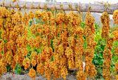 تولید کشمش، سرمایه گذاری جذاب با درآمد ارزی