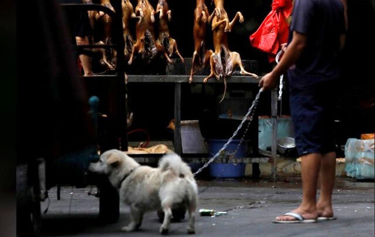 گشایش نمایشگاه گوشت سگ در چین