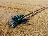 افزایش 1.5درصدی سطح زیر کشت گندم در سالجاری/ کشاورزان با تحویل گندم به سیلوها از خوراک دام شدن محصول جلوگیری کنند