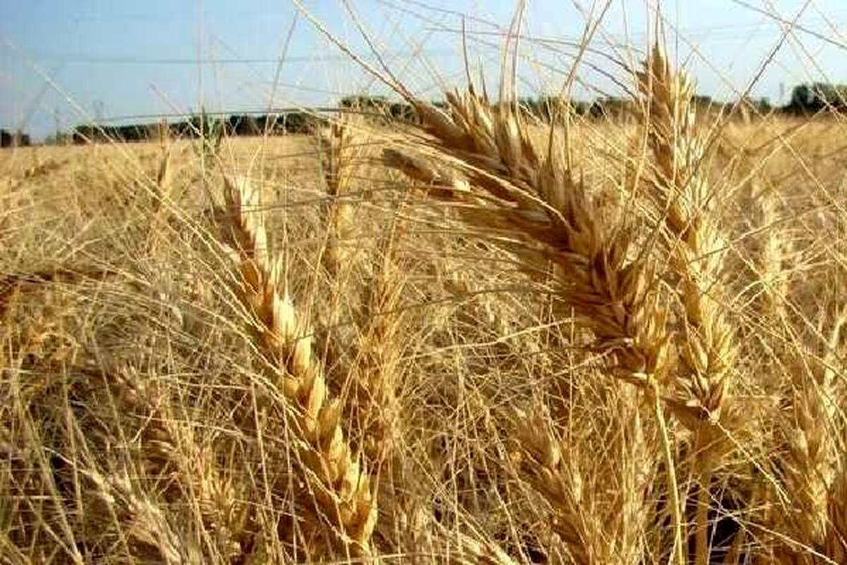 وزیر کشاورزی به مجلس احضار میشود