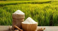 قیمت برنج داخلی ۴۳درصد افزایش داشت / گوشت قرمز چقدر گران شد؟