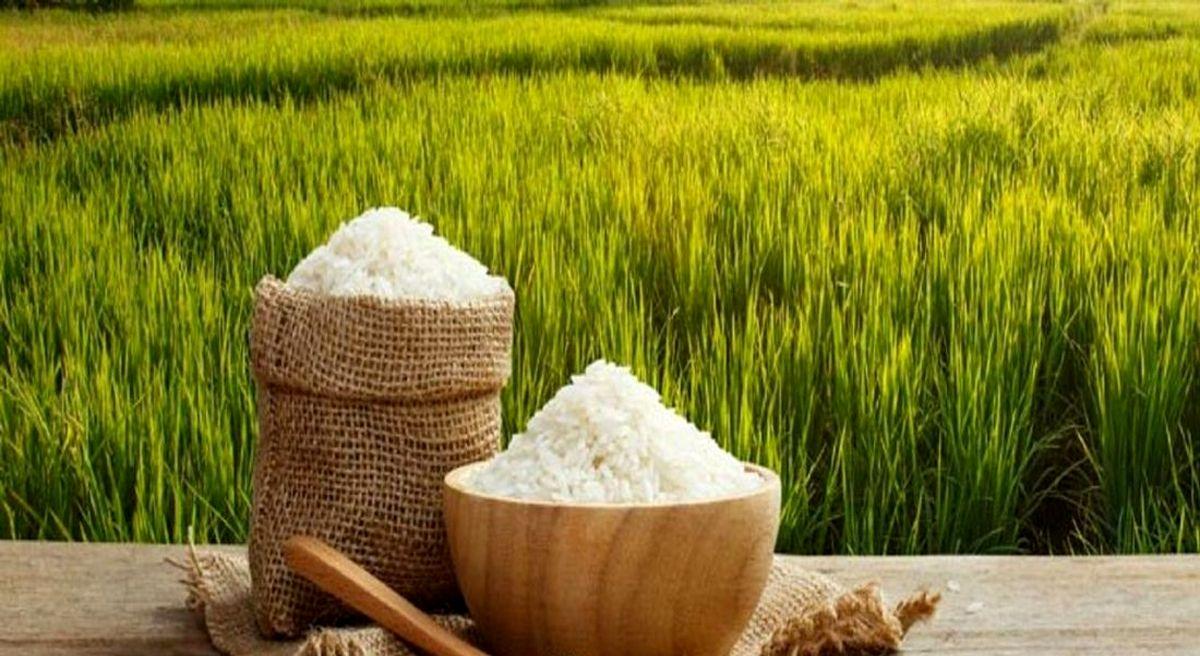 از برنج ۵۰هزار تومانی تعجب نکنید