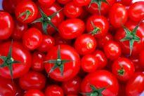 چرا ضوابط بستهبندی میوه صادراتی اجرا نشد؟