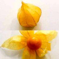 تولید میوهای لاکچری در آذربایجان غربی +عکس