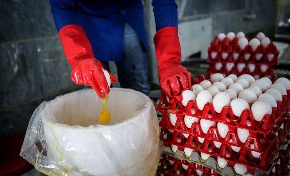 تخممرغ را قبل مصرف نشویید
