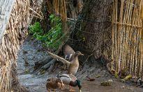 پیشگیری و درمان استرس با بررسی پرندگان آوازخوان