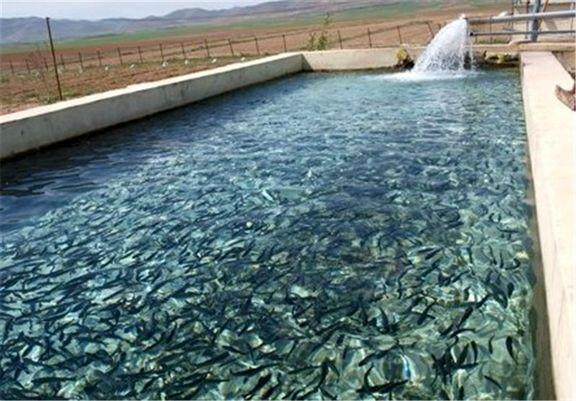 خوراک برای تغذیه بچه ماهیها نیست/ قاچاق پودر ماهی توسط خارجیها