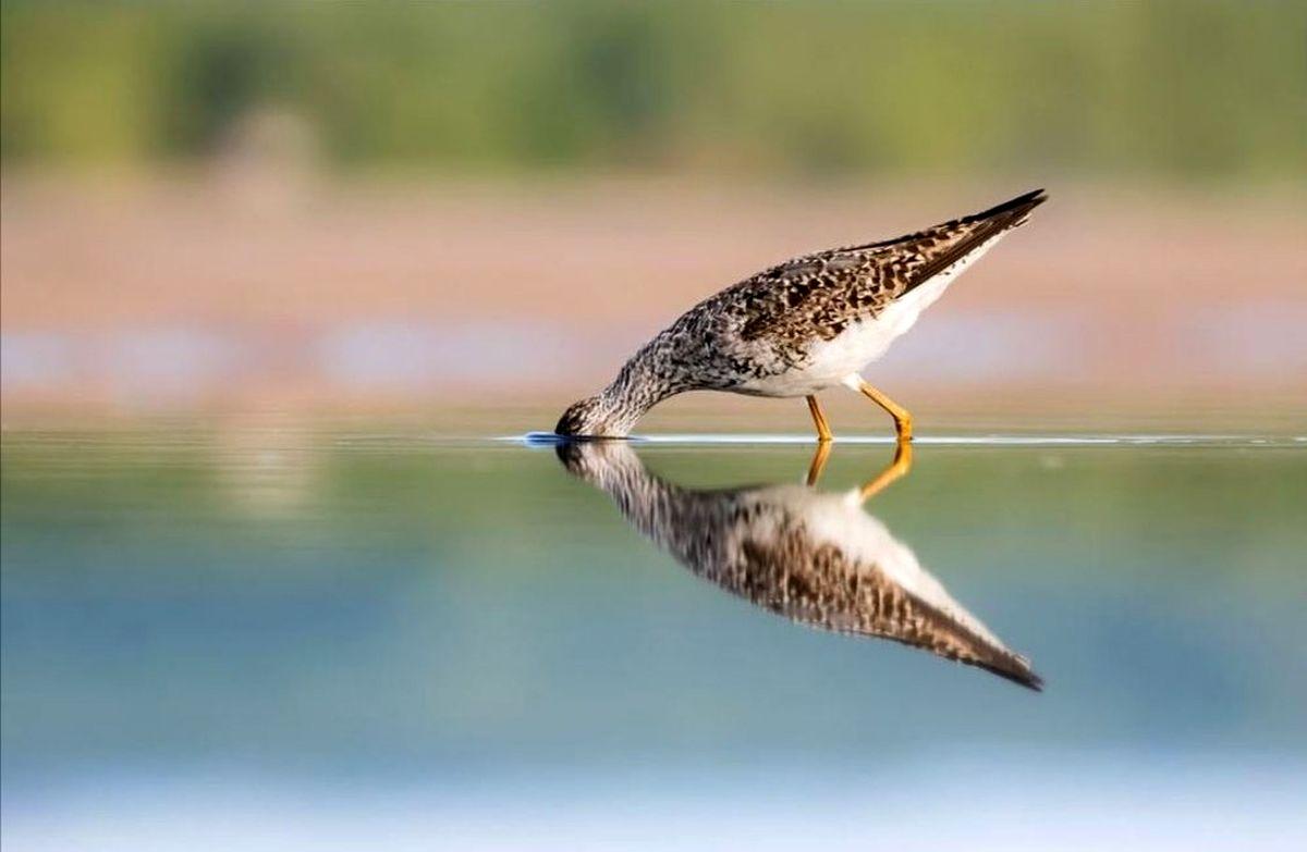 انعکاس یک پرنده در عکس روز نشنال جئوگرافیک