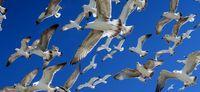 پرندگان دریایی در سواحل بوشهر +تصاویر