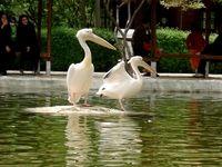 باغ پرندگان تهران تعطیل شد
