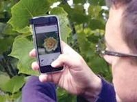 اپلیکیشنی برای فهمیدن نام گلها و گیاهان +لینک دانلود