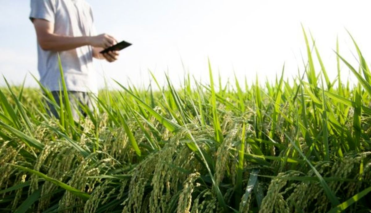 توصیههای هواشناسی کشاورزی برای روزهای بارانی