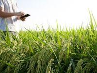 استارتآپها به کمک کشاورزی میروند