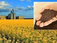 اراده ملی برای افزایش تولید دانههای روغنی نیست/ خروج ۳۸میلیارد دلار ارز برای واردات روغن خام و دانه روغنی طی ۲۵سال
