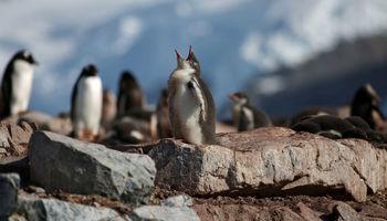 تصاویر منحصربهفرد از قطب جنوب